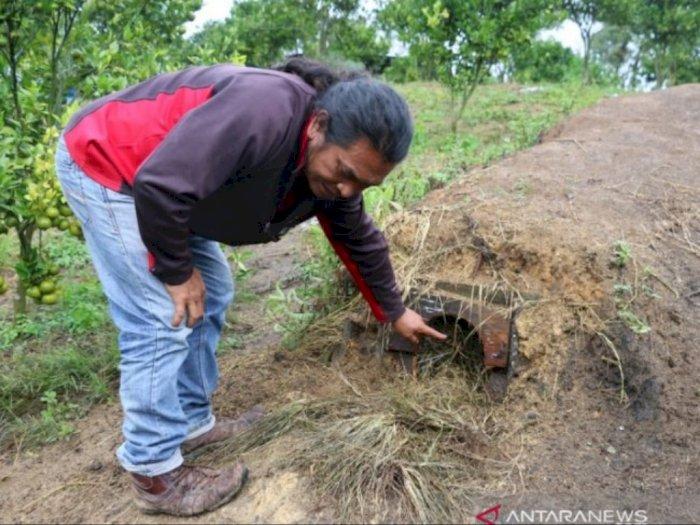 Misteri Kematian Ternak di Taput, Ulah Makhluk Penghisap Darah Bertubuh Besar dan Kuat