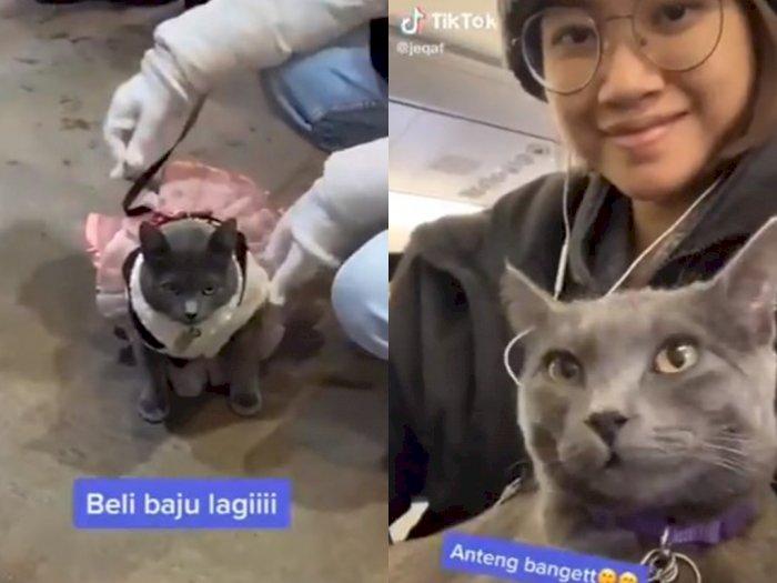 Dibawa Pemiliknya Traveling, Kucing Ini Tetap Anteng!