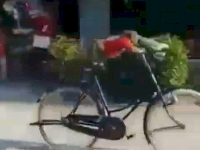 Lagi Musim Gowes, Monyet Ini Tak Mau Kalah dengan Manusia, Lihat Skill Bersepedanya