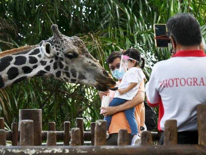FOTO: Kebun Binatang Singapura Kembali Dibuka