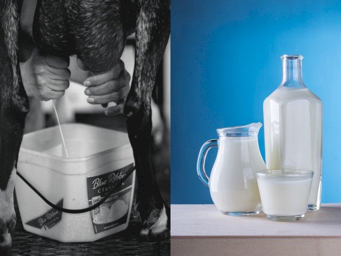 #KAMUHARUSTAU Minum Susu Mentah Bisa Picu Berbagai Penyakit