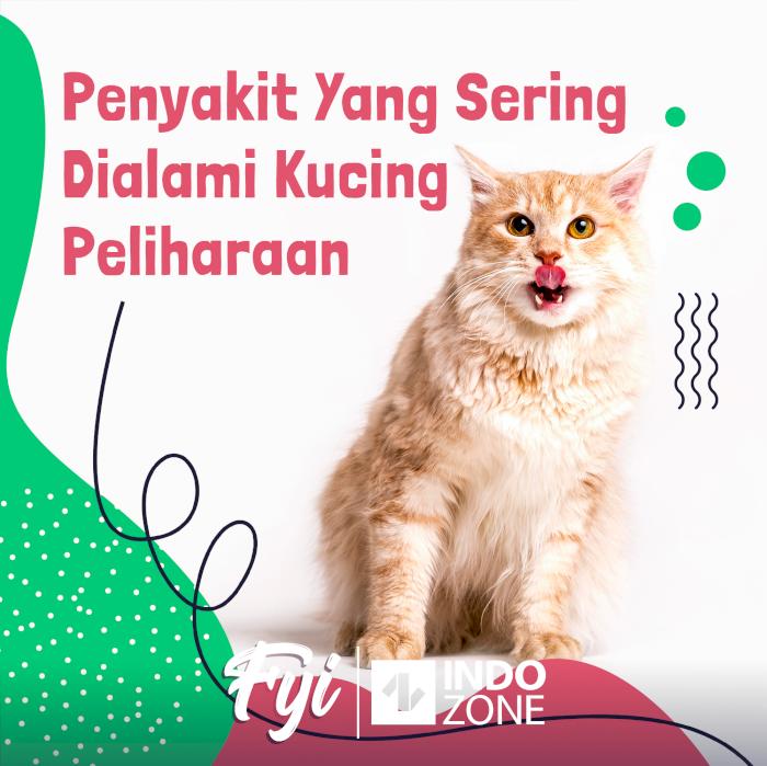 Penyakit Yang Sering Dialami Kucing Peliharaan