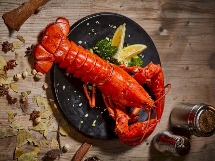 Rasanya Enak dan Dagingnya Tebal, Ini 3 Daerah Penghasil Lobster Terbaik di Indonesia