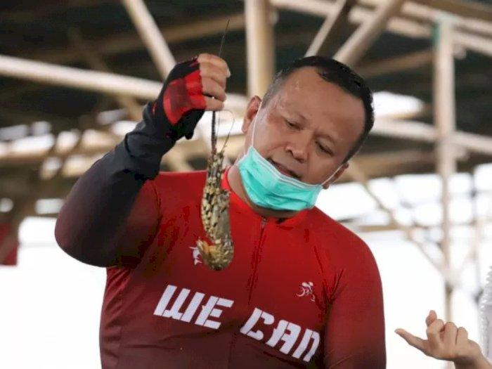 Soal Benih Lobster, Edhy Prabowo: Banyak, Dari Sabang Sampai Merauke Ada Nelayan Lobster