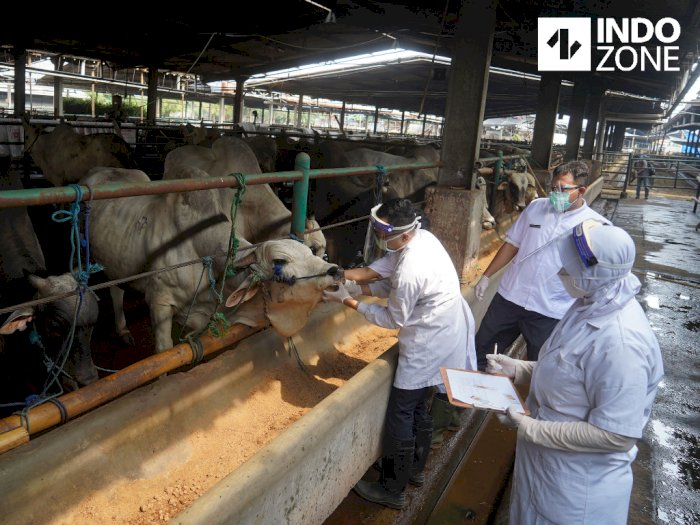 FOTO: Pemeriksaan Kesehatan Hewan Kurban di RPH Cakung