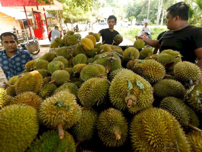 Benarkah Durian Bisa Sebabkan Alergi?