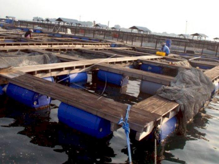 Kementerian Kelautan dan Perikanan Genjot Ekspor Ikan Kerapu