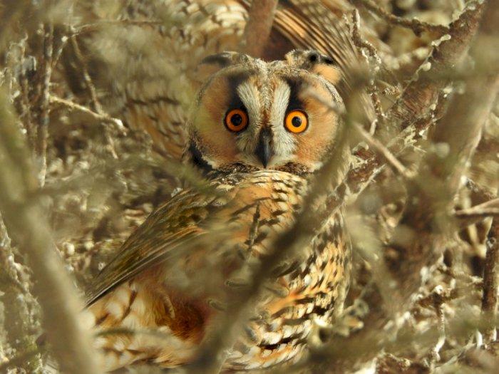 Sejarah Burung Hantu Sebagai Simbol Kebijaksanaan dan Intelektual