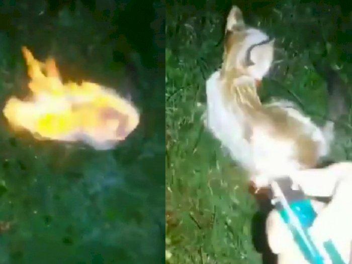 Keji, Kucing Malang Ini Dibakar Hidup-hidup, Penyiksa Justru Asyik Merekam