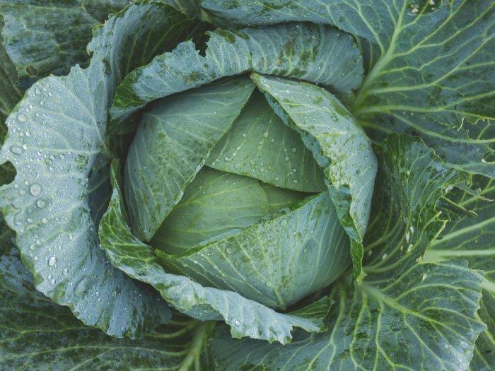 Peneliti Klaim Sayuran Ini Ampuh Jaga Tubuh dari Serangan Virus Corona