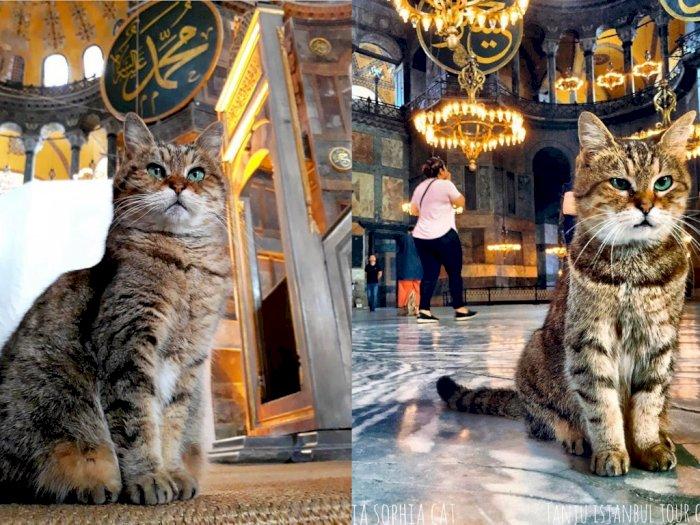 Ini Gli, Kucing yang Tetap Jadi Penghuni Hagia Sophia Meski Rumahnya Beralih Fungsi