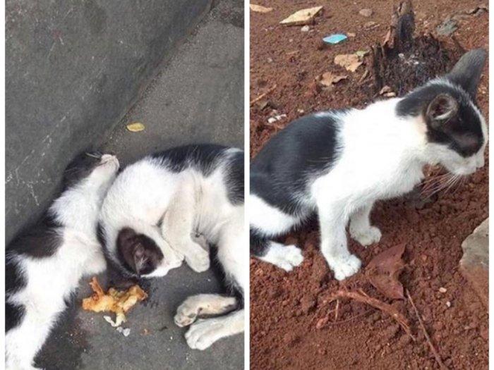 Sedih, Anak Kucing Ini Sisakan Makanan untuk Saudaranya yang Ternyata Sudah Mati
