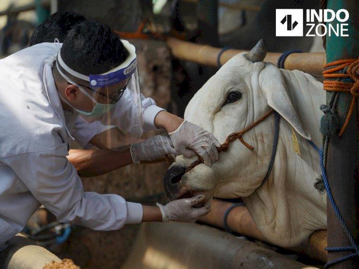 Cacat dan Belum Cukup Umur, 96 Ekor Hewan Tak Bisa Dikurbankan