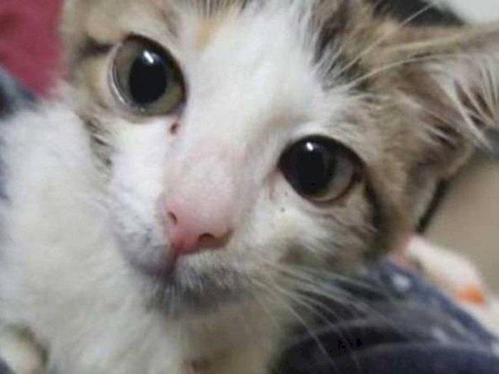 Gila! Remaja 15 Tahun Ini Perkosa Anak Kucing Sampai Mati