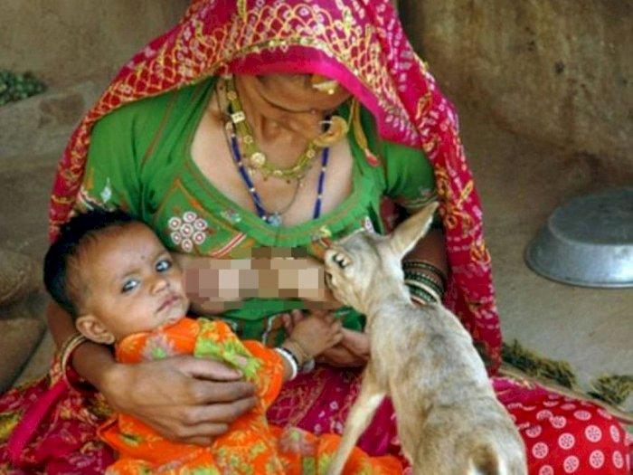 Dianggap Hewan Suci, Ibu-Ibu di India Rela Menyusui Rusa