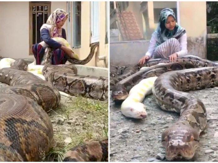 Gadis Ini Pelihara 6 Ekor Ular Python di Rumahnya