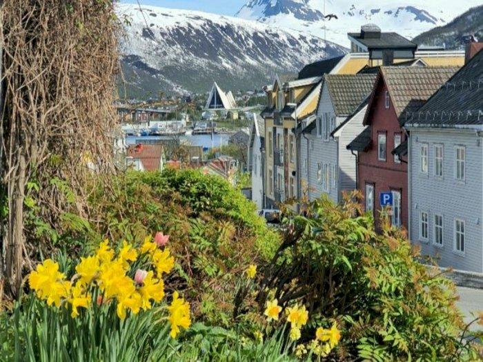 Mengintip Potret Tromso, Kota Bunga di Utara Bumi