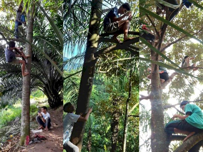 Cari Sinyal untuk Belajar Daring, Sejumlah Pelajar di Simalungun Ini Terpaksa Panjat Pohon