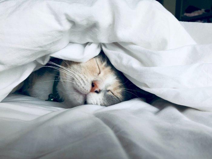5 Hal yang Harus Dihindari agar Tidur Lebih Nyenyak