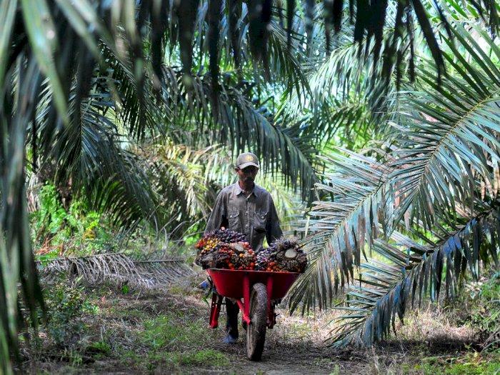 Kemendag Inisiatif Bentuk Tim Kampanye Positif Sawit Indonesia
