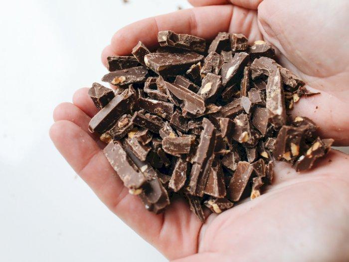 Studi: Konsumsi Cokelat Bagus untuk Jaga Jantung dan Pembuluh Darah