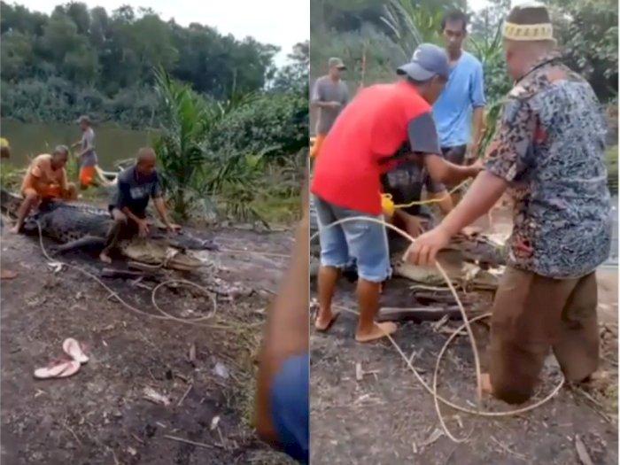 Video Detik-detik 'Buaya Raksasa' Saat Dievakuasi dari Sungai, Titisan Siluman?