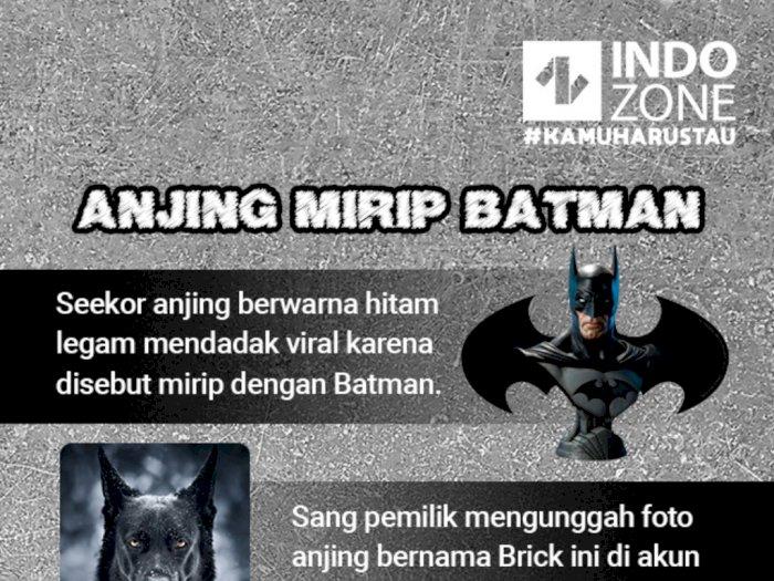 Anjing Mirip Batman