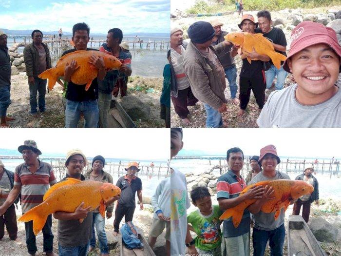 Viral Warga Tangkap Ikan Emas Ukuran Jumbo di Danau Toba, Netizen Khawatir Terjadi Bencana