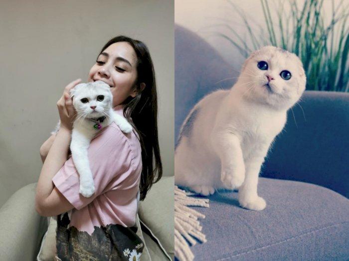 Nagita Pelihara Kucing, Netizen: Langsung Jadi Kucing Kaya