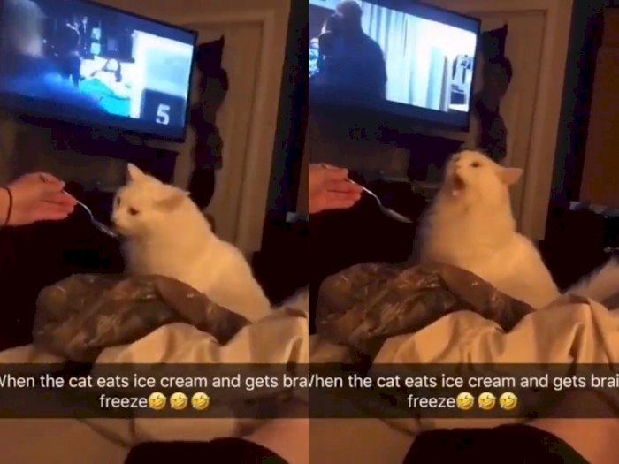 Coba Makan Es Krim Untuk Pertama Kalinya, Kucing ini Malah Alami Brain Freeze
