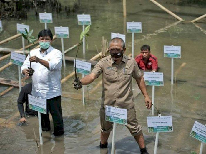 Pemko Medan Kembangkan Ekowisata Mangrove Jadi Wisata Andalan