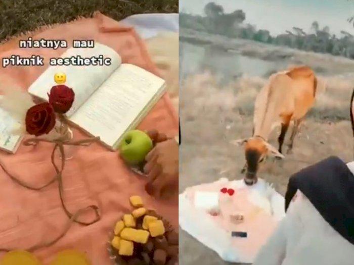 Ngakak! Niatnya Mau Piknik Ala-ala di Padang Rumput, Cewek Ini Malah Disamperin Sapi