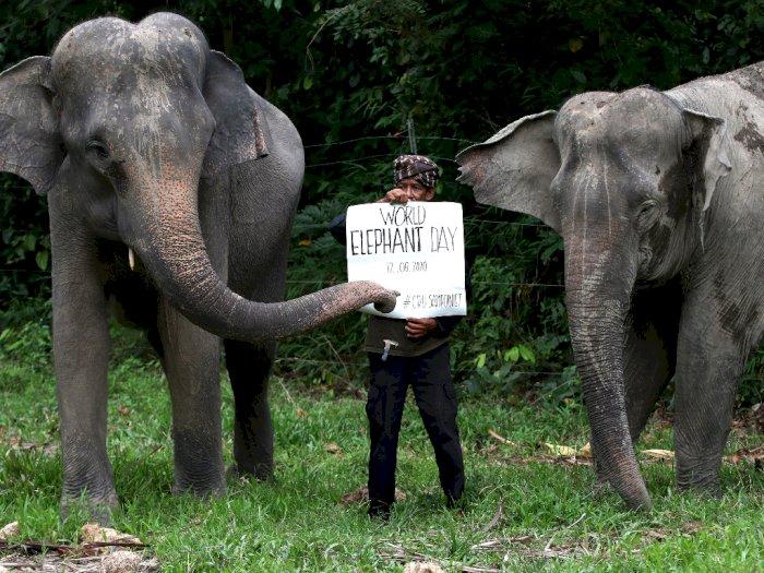 FOTO: Peringatan Hari Gajah Sedunia di Aceh