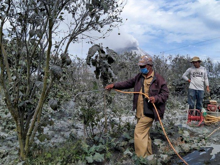 Erupsi Sinabung Rusak Lahan Pertanian, Semakin Sulit Pulihkan Ekonomi di Masa Covid-19