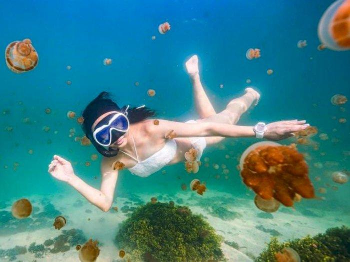 Berenang Bareng Ubur-ubur, Yuk Intip Pesona Indah Pulau Kakaban