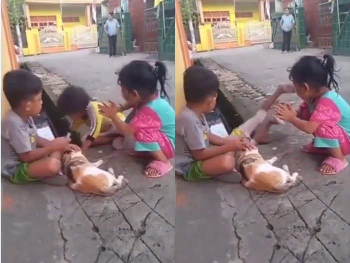 Lagi Asik Elus-elus Kucing, Bocah Ini Malah Jatuh Ke Selokan Gegara Tersenggol Temannya