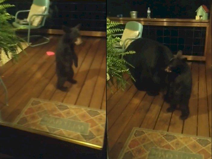 Lagi Asik Tidur, Keluarga ini Terbangun Gegara Kaget Ada Beruang Di Luar Rumahnya