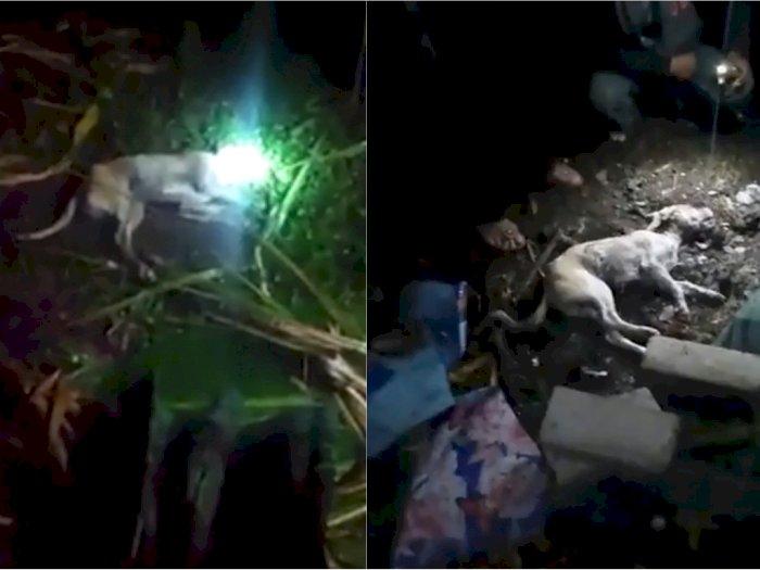 Manusia Diduga Berubah Jadi Anjing Dikubur Hidup-hidup, Menangis Saat Masuk Liang Lahat