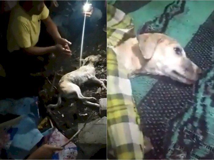Warga Lombok Geger Pelajar SMP Berubah Jadi Anjing, Dikubur Hidup-hidup