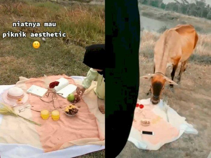 Viral Video Piknik Wanita yang Hancur Gegara Didatangi Lembu, Bikin Ngakak Kali!