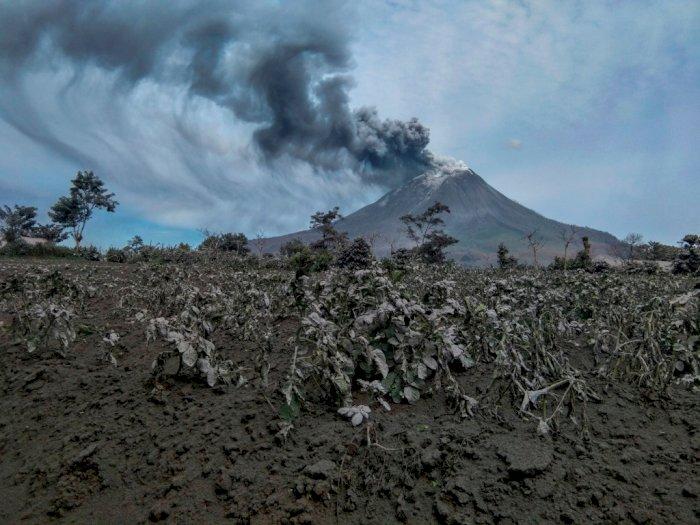 Gunung Sinabung Kembali Erupsi, Kota Berastagi Dihujani Abu Vulkanik Hingga Siang Ini