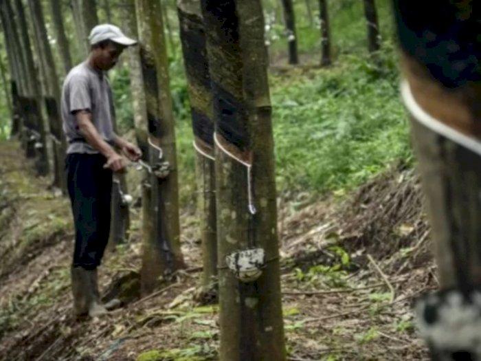 Permintaan China Bertambah, Ekspor Karet Asal Sumatera Utara Meningkat