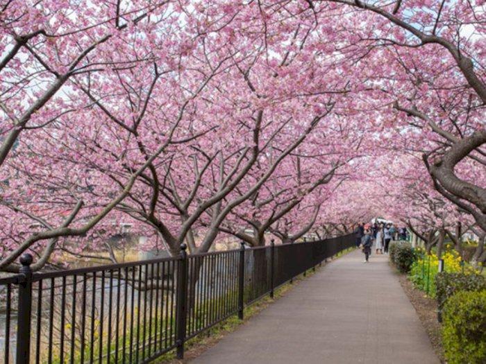 Mau Lihat Salju, Padang Pasir dan Sakura? Tak Perlu ke Luar Negeri