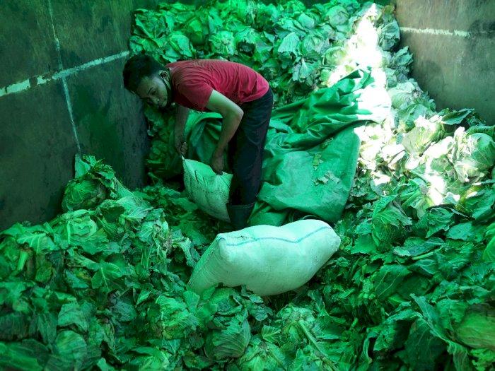 FOTO: Penyelundupan Minuman Keras di Bawah Tumpukan Sayuran