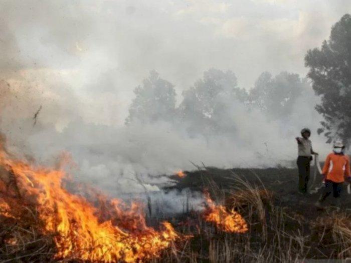 Tersangka Kasus Kebakaran Hutan dan Lahan di Indonesia Capai 112 Orang