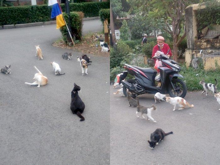 Ibu ini Rutin Beri Makan Kucing-kucing Liar, Netizen: Seneng Lihatnya