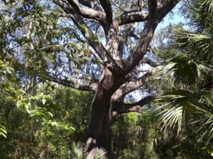 Pohon Iblis di Pulau Hutchinson yang Dihantui Kejahatan Pembunuh Berantai