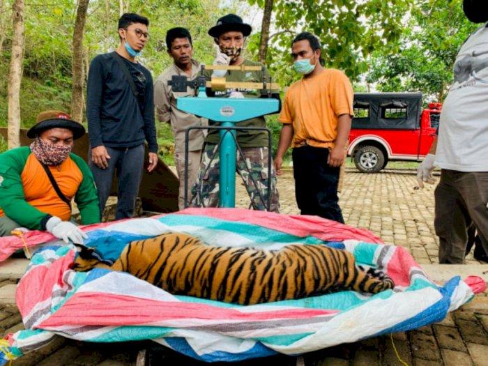 Belajar Daring, Pelajar di Tapsel Cari Sinyal dengan Melewati Jalur Perlintasan Harimau