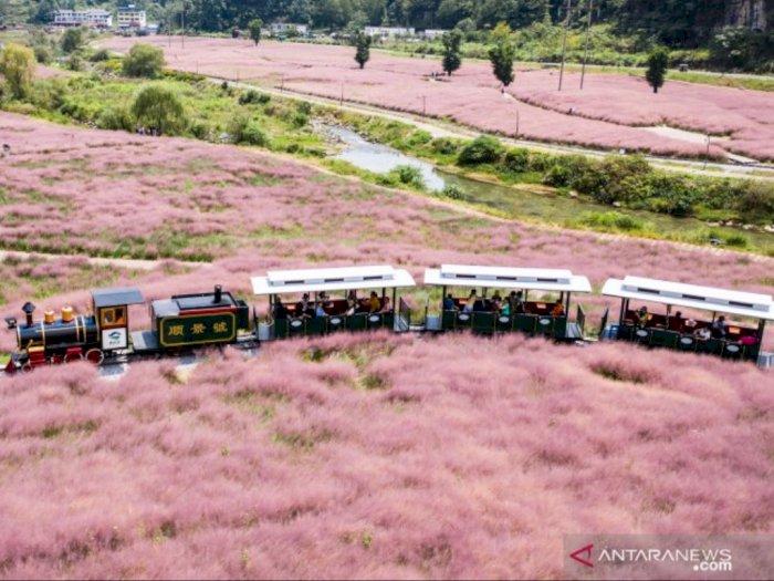 FOTO: Keindahan Padang Rumput Berwarna Pink di China