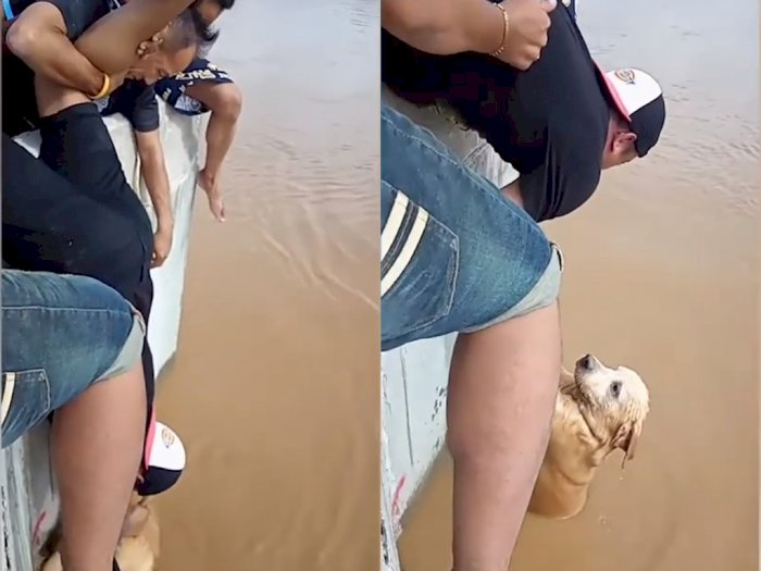 Salut! Sekelompok Remaja ini Bantu Anjing yang Terjatuh dan Terseret Arus Sungai